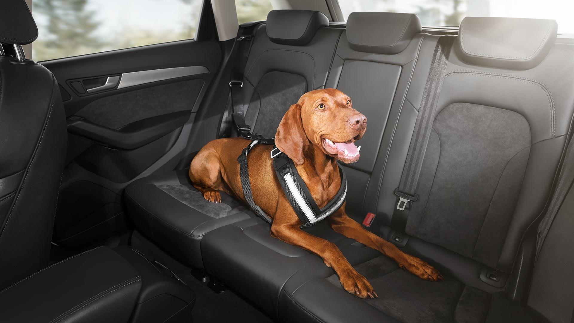 Audi Rs7 Dog Harness Extra Large 8x0019409c Audi
